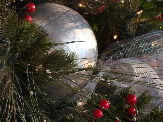 christmas-tree_dec1_560x420