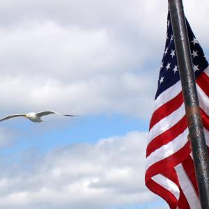 US-Flag and seagull